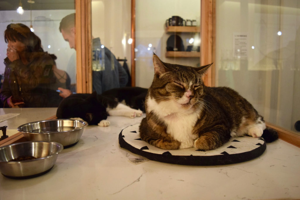 New Cat Cafe is the Purr-fect Spot to Unwind